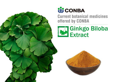 Antioxidant Botanical Herbal Extract Ginkgo Biloba Dry Leaves GACP