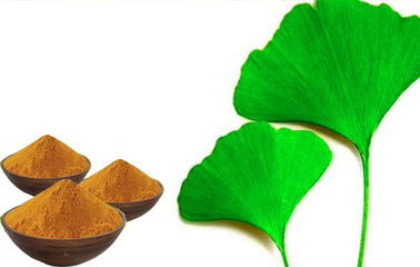 EP9.0 Low Ginkgolic Acid Ginkgo Leaf Extract With GACP Plantation