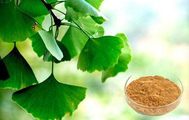 Pharmaceutical Grade Ginkgo Biloba Extract For Health Care Products